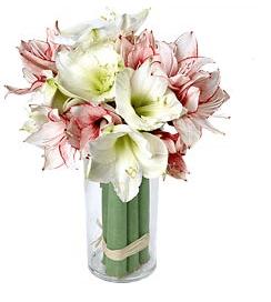 Bouquet d'Amaryllis Aquarelle