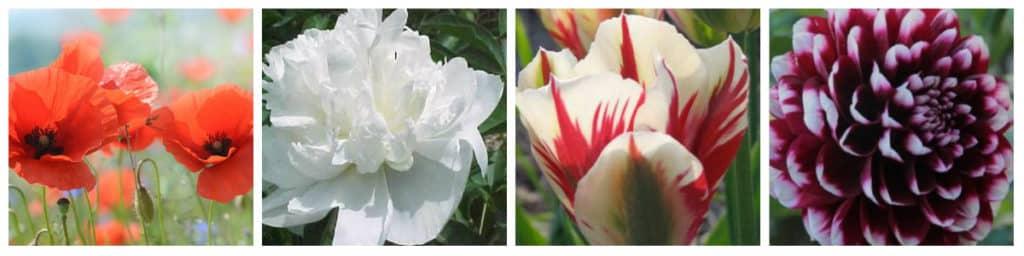 jardin fleurs de printemps au meilleur prix. Black Bedroom Furniture Sets. Home Design Ideas