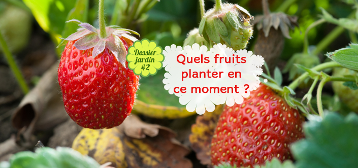 Quels fruits planter au printemps ?