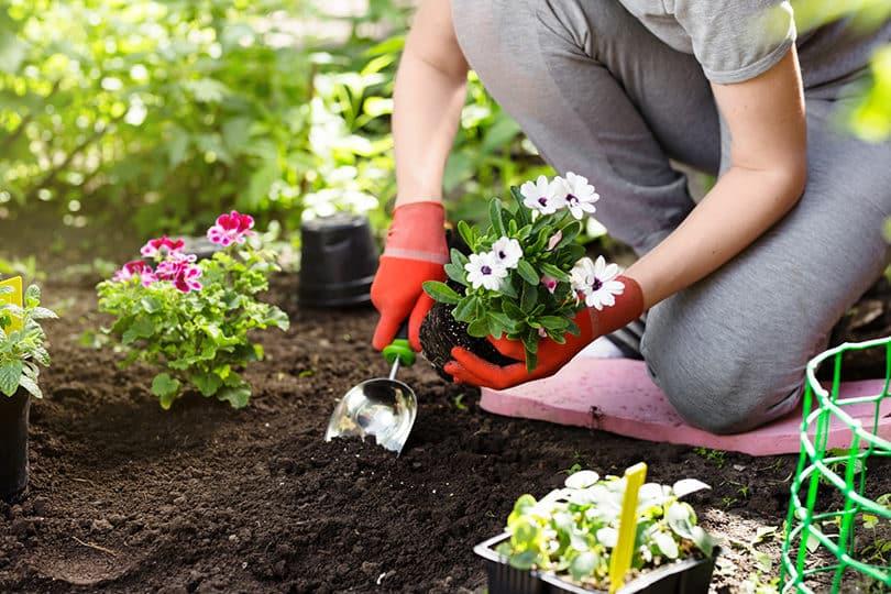 Jardin : fleurs de printemps au meilleur prix