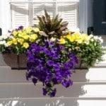 fleurs sur un balcon