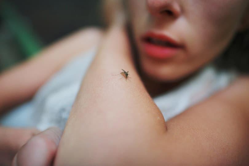 piqûres de moustique lemag