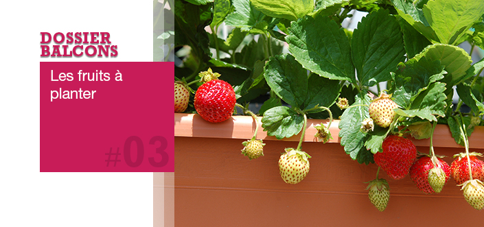 fruits balcon