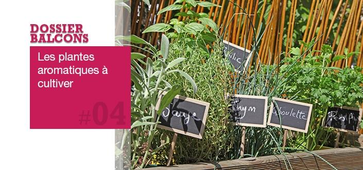 plantes aromatiques balcon
