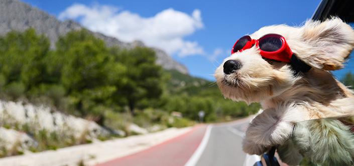 voyager moins cher avec son animal