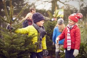 Sapin de Noël : guide pour l'acheter moins cher