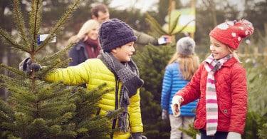 Bien choisir son sapin de Noëll