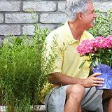 fleurs-planter