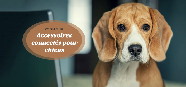accessoires connectés chiens