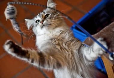 Journée du chat : nos trouvailles à partir de 6€ 3