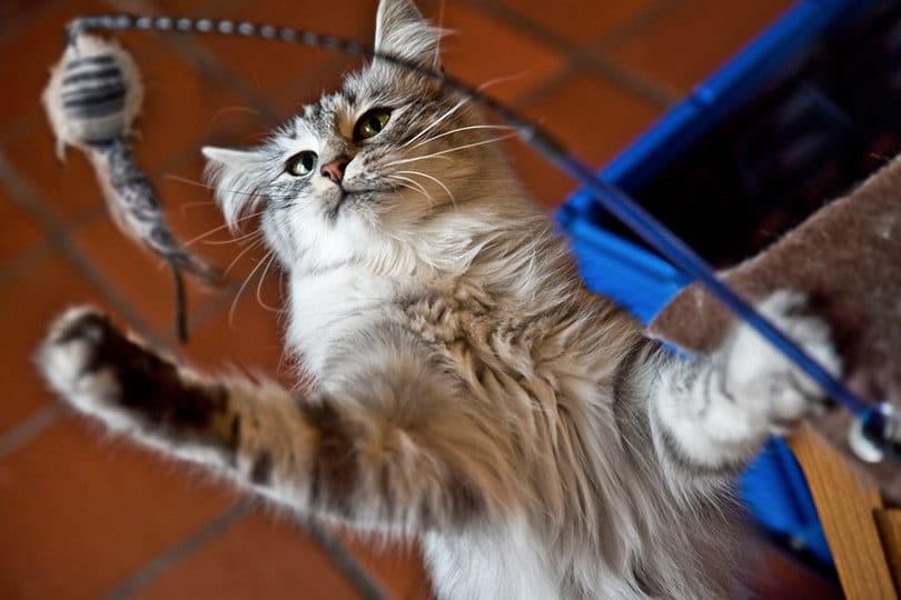 Journée du chat : nos trouvailles à partir de 6€ 1