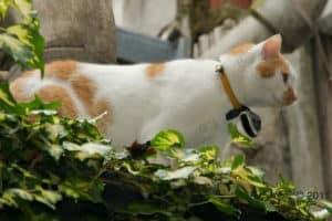 Journée du chat : nos trouvailles à partir de 6€ 4