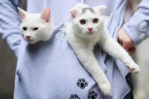 Journée du chat : nos trouvailles à partir de 6€ 11
