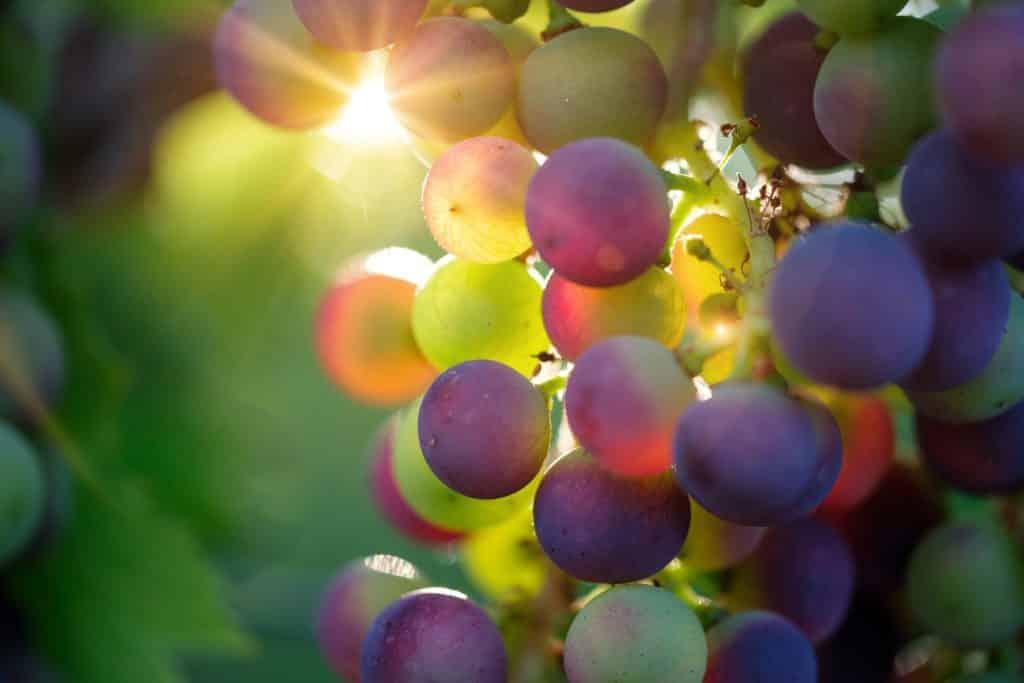 Achetez du vin en ligne au meilleur prix sur le site Lavinia.