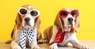 Journée Mondiale du chien : 4 accessoires (improbables) chez Aliexpress 13