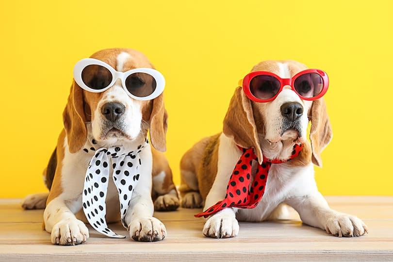 Journée Mondiale du chien : 4 accessoires (improbables) chez Aliexpress 1