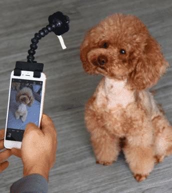 Journée Mondiale du chien : 4 accessoires (improbables) chez Aliexpress 4