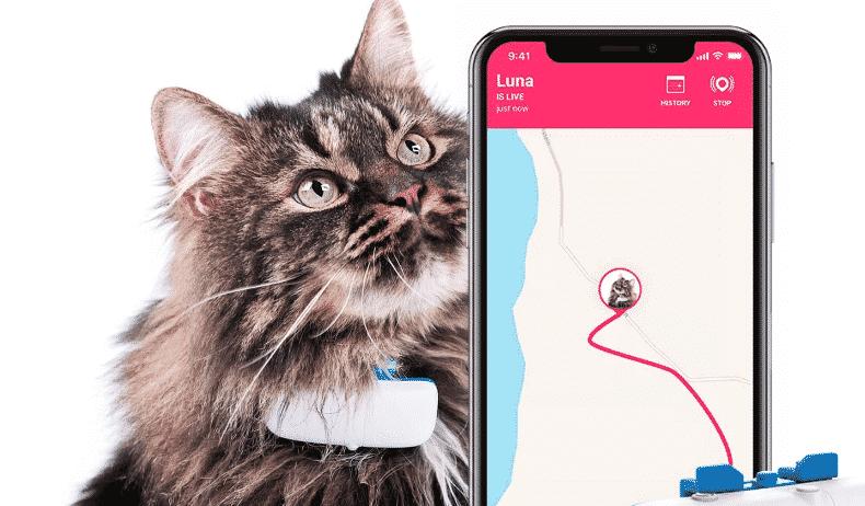 Journée internationale du chat : 5 sites avec cashback ! 1