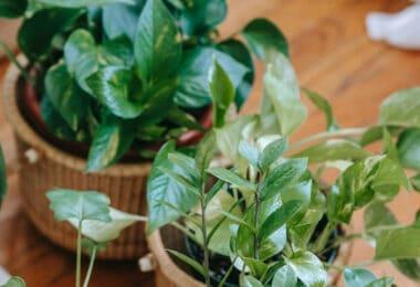 plantes dépolluantes lemag