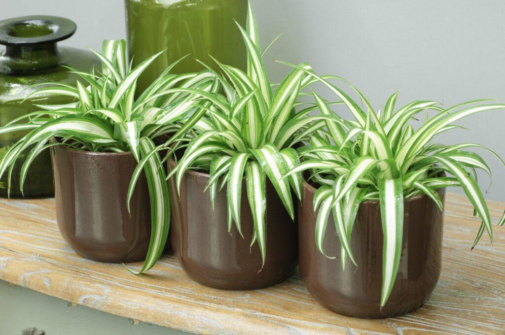 plantes dépolluantes 1